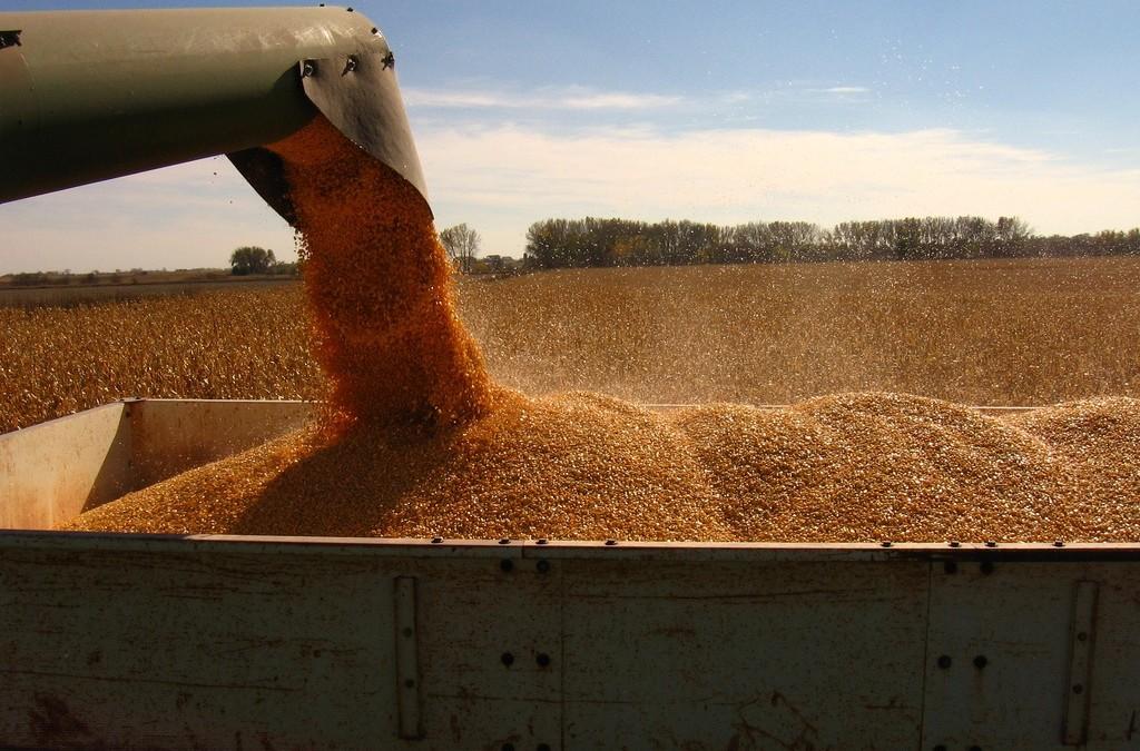 International wheat production statistics